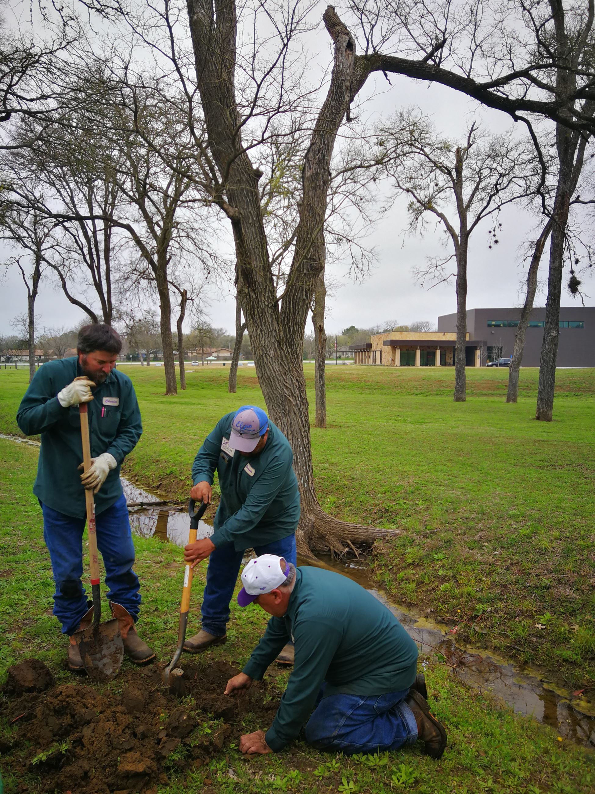 Grounds crew planting tree